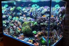 Aquarium Connections custom build aquarium 8