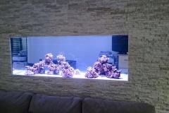 Aquarium Connections custom build aquarium 11