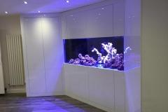 Aquarium Connections custom build aquarium 13
