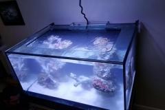 Aquarium Connections custom build aquarium 1