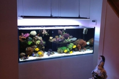 Aquarium Connections custom build aquarium 2