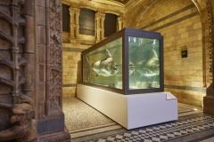 Aquarium Connections custom build aquarium 18