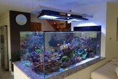 Aquarium Connections custom build aquarium 15